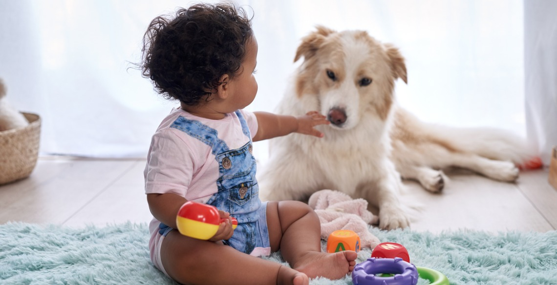 Animais de estimação e bebês podem conviver sem riscos?